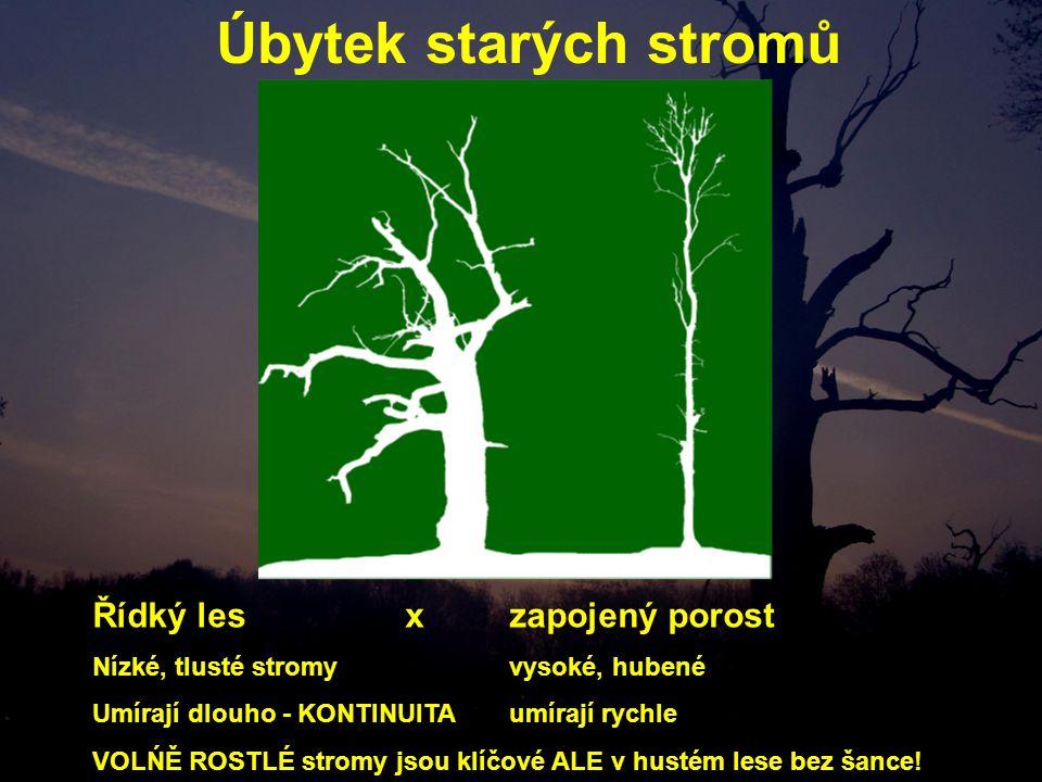 Úbytek starých stromů Řídký les xzapojený porost Nízké, tlusté stromyvysoké, hubené Umírají dlouho - KONTINUITA umírají rychle VOLŃĚ ROSTLÉ stromy jsou klíčové ALE v hustém lese bez šance!