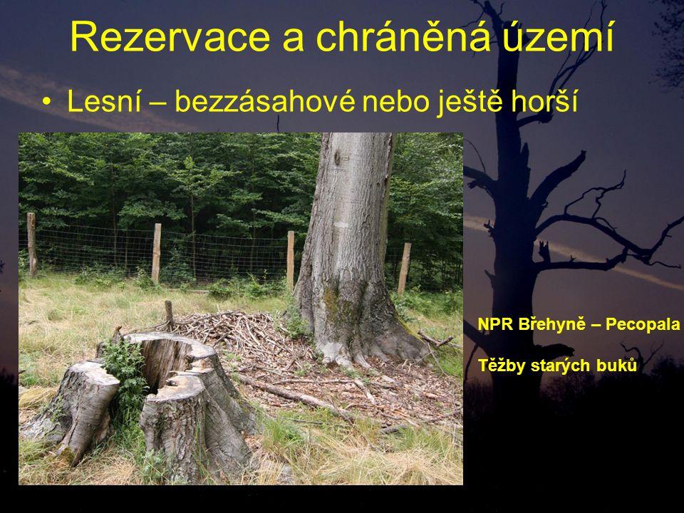 Rezervace a chráněná území Lesní – bezzásahové nebo ještě horší NPR Břehyně – Pecopala Těžby starých buků