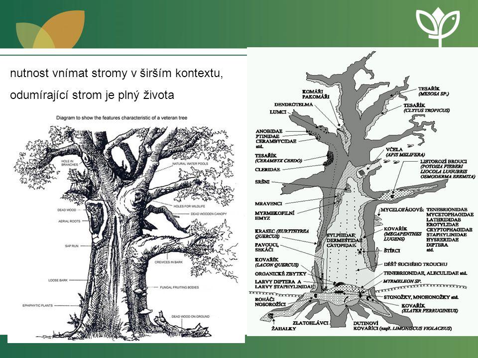 nutnost vnímat stromy v širším kontextu, odumírající strom je plný života