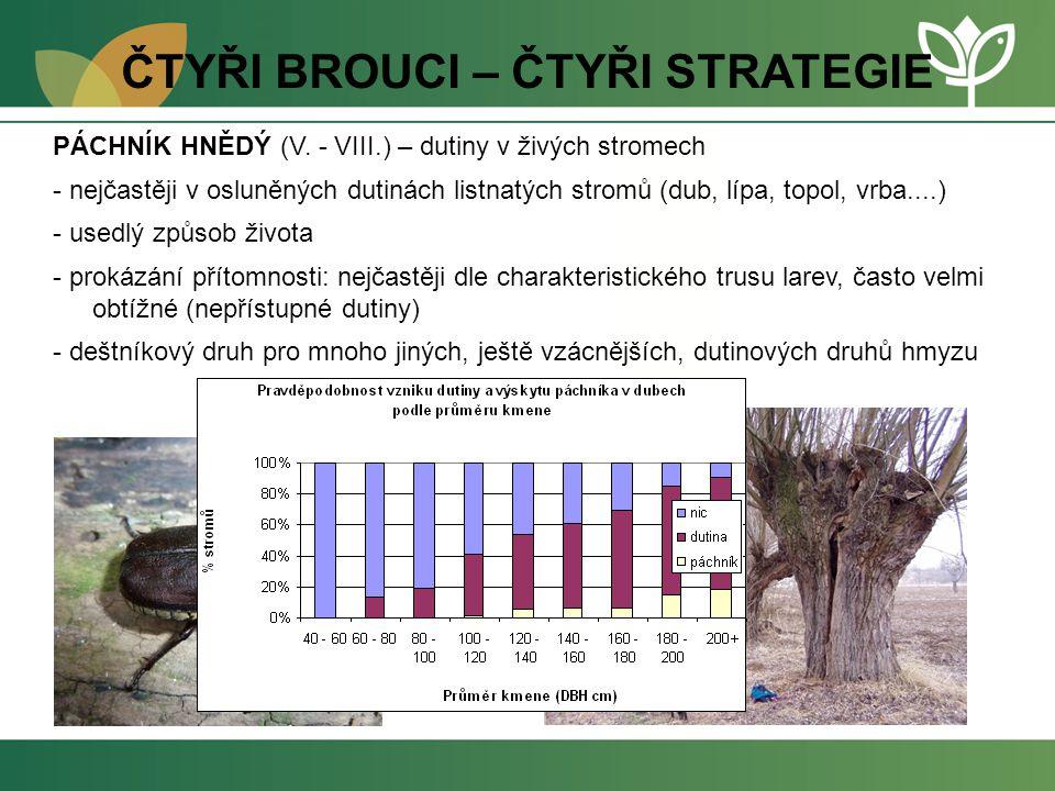ČTYŘI BROUCI – ČTYŘI STRATEGIE PÁCHNÍK HNĚDÝ (V. - VIII.) – dutiny v živých stromech - nejčastěji v osluněných dutinách listnatých stromů (dub, lípa,