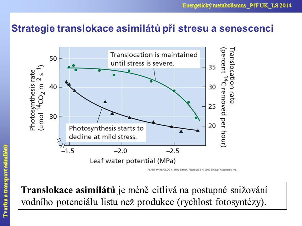 Translokace asimilátů je méně citlivá na postupné snižování vodního potenciálu listu než produkce (rychlost fotosyntézy). Strategie translokace asimil
