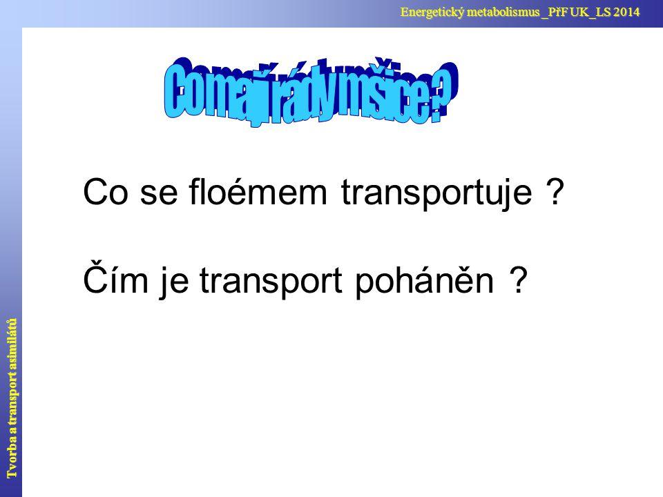Co se floémem transportuje ? Čím je transport poháněn ? Tvorba a transport asimilátů Energetický metabolismus _PřF UK_LS 2014