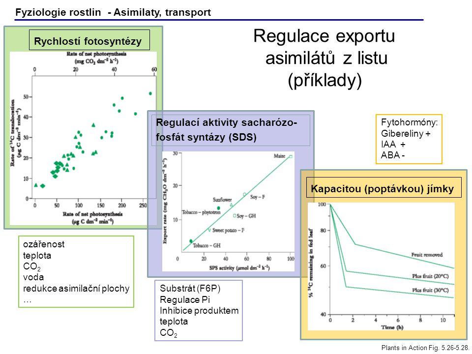 Fyziologie rostlin - Asimilaty, transport Plants in Action Fig. 5.26-5.28. Regulace exportu asimilátů z listu (příklady) Rychlostí fotosyntézy Regulac