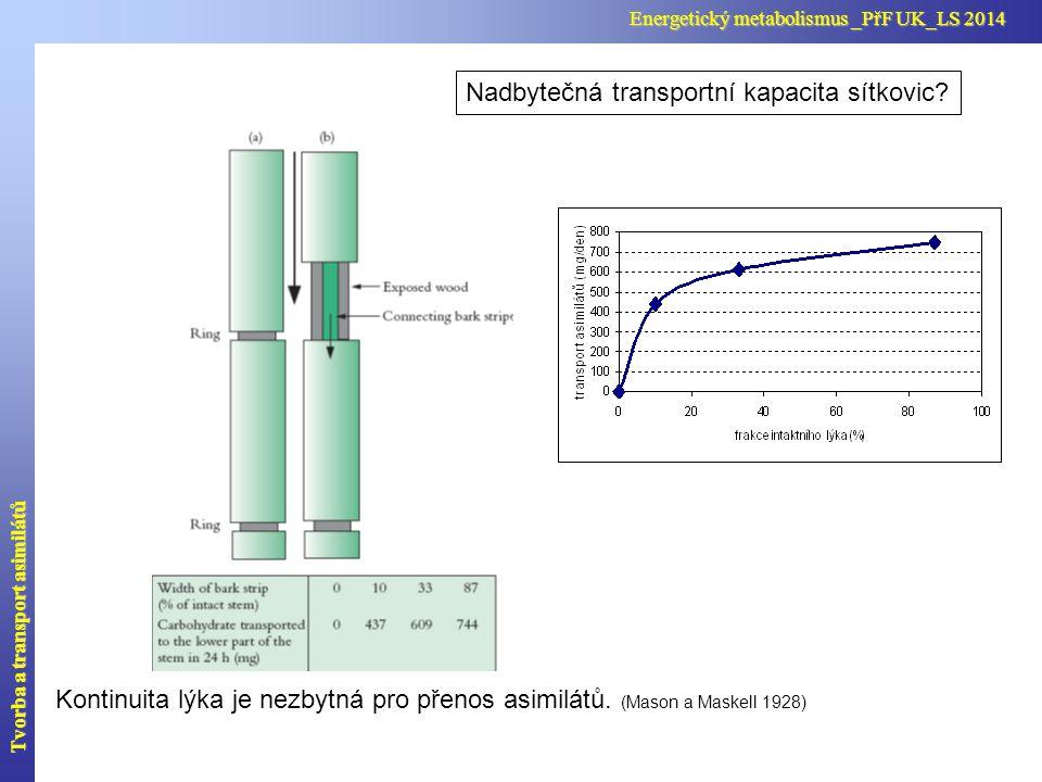Nadbytečná transportní kapacita sítkovic? Kontinuita lýka je nezbytná pro přenos asimilátů. (Mason a Maskell 1928) Tvorba a transport asimilátů Energe