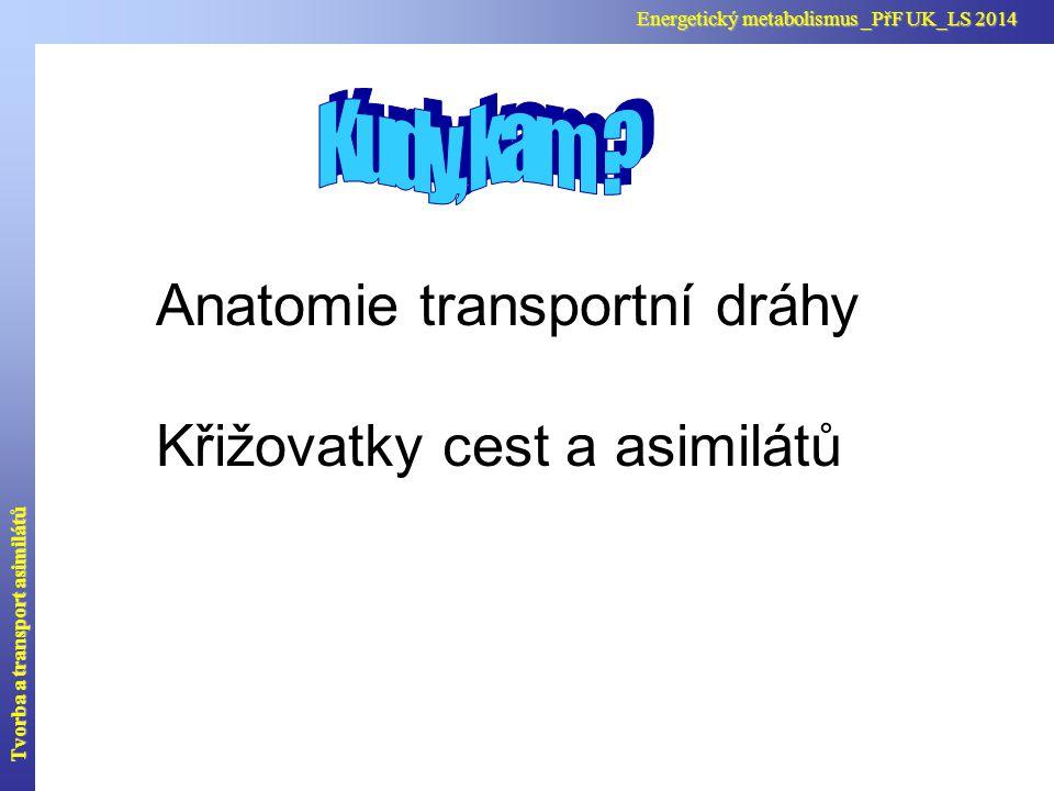 Anatomie transportní dráhy Křižovatky cest a asimilátů Tvorba a transport asimilátů Energetický metabolismus _PřF UK_LS 2014