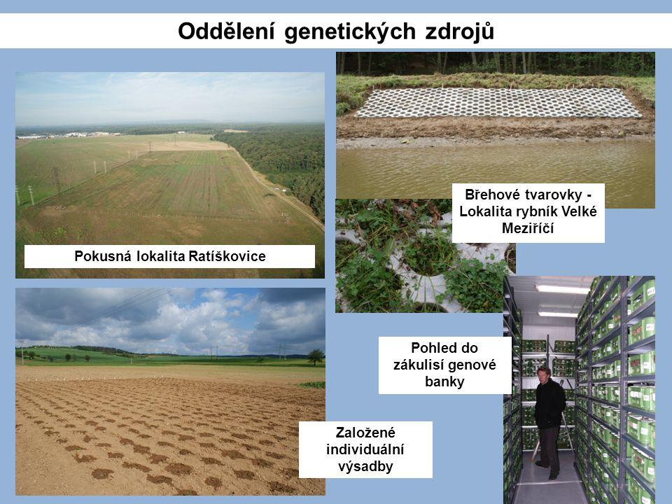 Pokusná lokalita Ratíškovice Břehové tvarovky - Lokalita rybník Velké Meziříčí Pohled do zákulisí genové banky Založené individuální výsadby