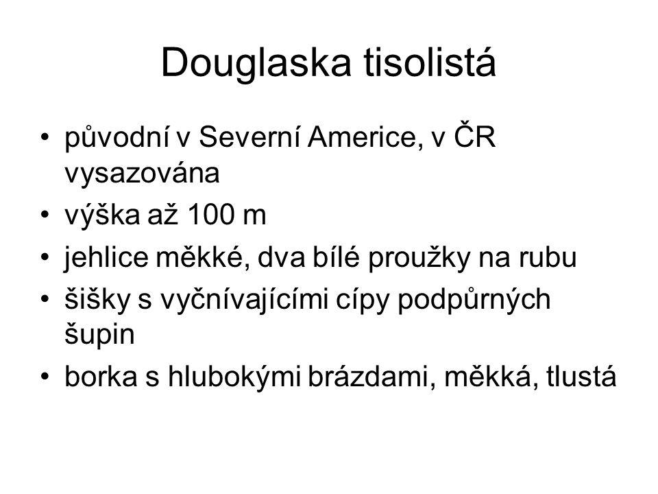 Douglaska tisolistá původní v Severní Americe, v ČR vysazována výška až 100 m jehlice měkké, dva bílé proužky na rubu šišky s vyčnívajícími cípy podpů