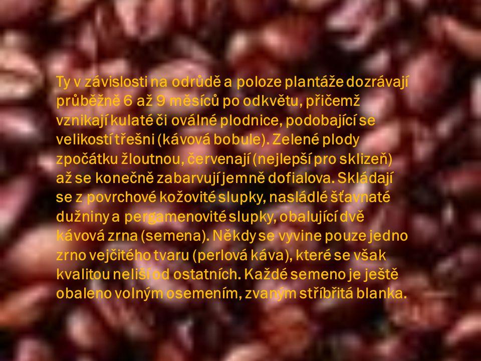  Rozpustná káva (instantní) je čistým kávovým extraktem.