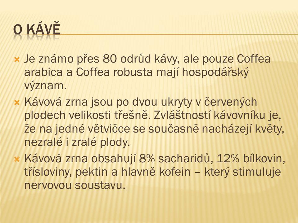  Na čem roste káva. Jaké jsou nejrozšířenější odrůdy kávy.