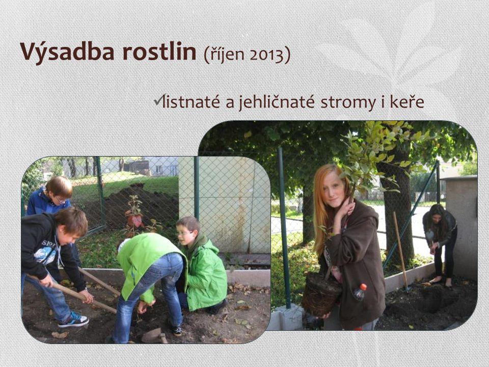 Výsadba rostlin (říjen 2013) listnaté a jehličnaté stromy i keře
