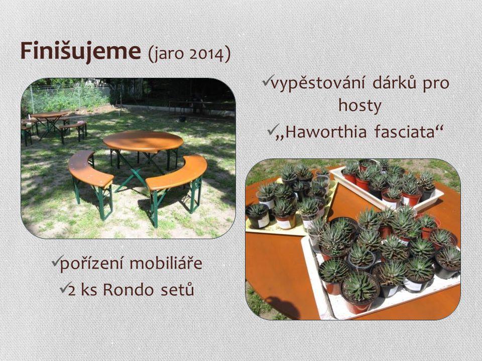 """Finišujeme (jaro 2014) pořízení mobiliáře 2 ks Rondo setů vypěstování dárků pro hosty """"Haworthia fasciata"""