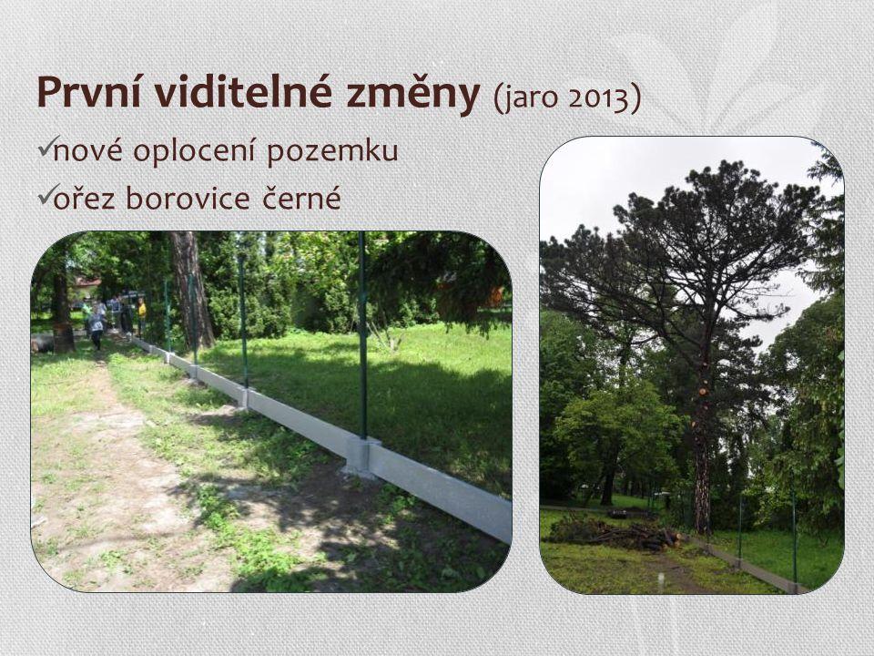 První viditelné změny (jaro 2013) nové oplocení pozemku ořez borovice černé