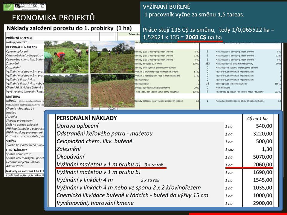 EKONOMIKA PROJEKTŮ Výroba sazenic ve školce VYŽÍNÁNÍ BUŘENĚ 1 pracovník vyžne za směnu 1,5 tareas. Práce stojí 135 C$ za směnu, tedy 1/0,065522 ha = 1