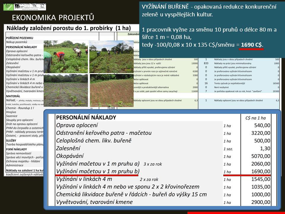 EKONOMIKA PROJEKTŮ Výroba sazenic ve školce VYŽÍNÁNÍ BUŘENĚ - opakovaná redukce konkurenční zeleně u vyspělejších kultur. 1 pracovník vyžne za směnu 1