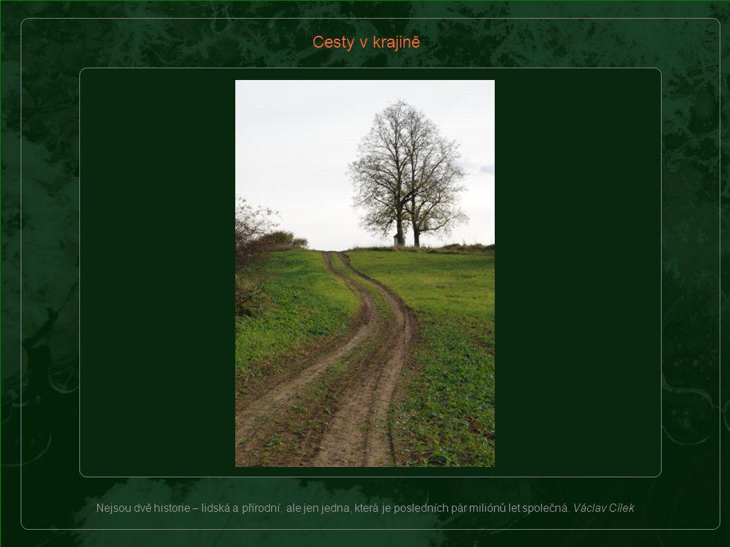 Bylinná společenstva - květiny, pokrývající meze a příkopy kolem cest v krajině nehnojené průmyslovými hnojivy, jsou často velmi pestrá.