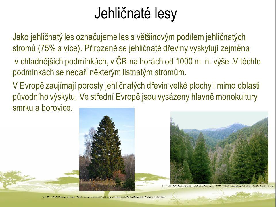 Jehličnaté lesy Jako jehličnatý les označujeme les s většinovým podílem jehličnatých stromů (75% a více). Přirozeně se jehličnaté dřeviny vyskytují ze