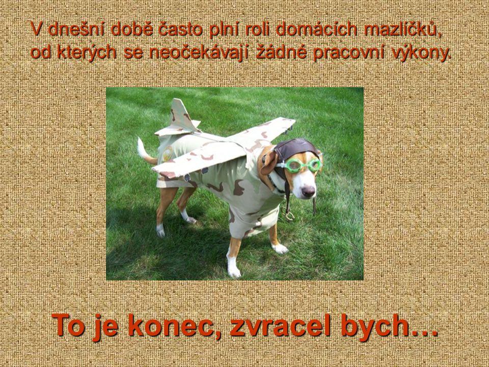 Psi, kteří žijí s lidmi, vnímají své majitele jako svoji smečku a svého pána jako nadřazeného jedince.