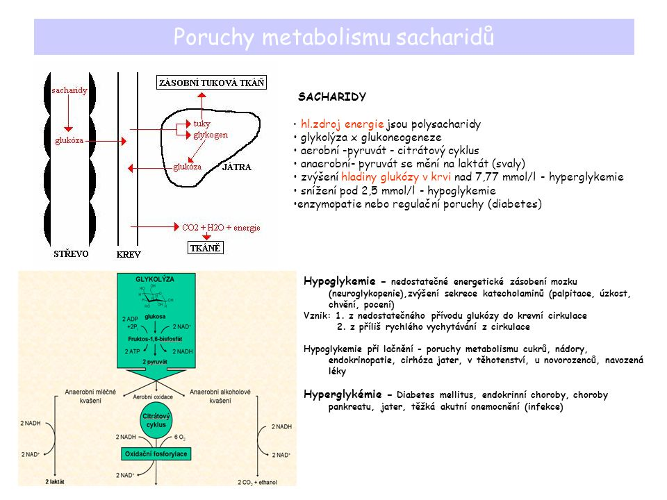 Poruchy metabolismu sacharidů SACHARIDY hl.zdroj energie jsou polysacharidy glykolýza x glukoneogeneze aerobní -pyruvát - citrátový cyklus anaerobní-