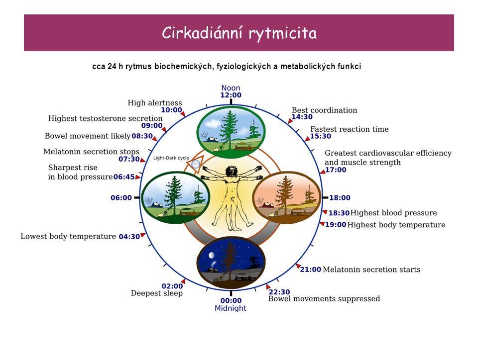 Cirkadiánní rytmicita cca 24 h rytmus biochemických, fyziologických a metabolických funkcí
