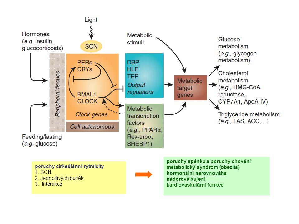 poruchy spánku a poruchy chování metabolický syndrom (obezita) hormonální nerovnováha nádorové bujení kardiovaskulární funkce poruchy cirkadiánní rytm