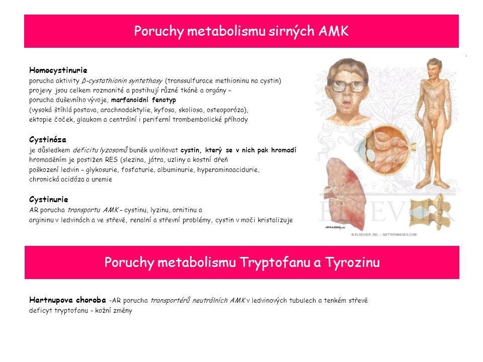 Poruchy metabolismu sirných AMK Homocystinurie porucha aktivity β-cystathionin syntethasy (transsulfurace methioninu na cystin) projevy jsou celkem rozmanité a postihují různé tkáně a orgány – porucha duševního vývoje, marfanoidní fenotyp (vysoká štíhlá postava, arachnodaktylie, kyfosa, skoliosa, osteoporóza), ektopie čoček, glaukom a centrální i periferní trombembolické příhody Cystinóza je důsledkem deficitu lyzosomů buněk uvolňovat cystin, který se v nich pak hromadí hromaděním je postižen RES (slezina, játra, uzliny a kostní dřeň poškození ledvin – glykosurie, fosfaturie, albuminurie, hyperaminoacidurie, chronická acidóza a uremie Cystinurie AR porucha transportu AMK – cystinu, lyzinu, ornitinu a argininu v ledvinách a ve střevě, renalní a střevní problémy, cystin v moči kristalizuje Hartnupova choroba -AR porucha transportérů neutrálních AMK v ledvinových tubulech a tenkém střevě deficyt tryptofanu - kožní změny Poruchy metabolismu Tryptofanu a Tyrozinu