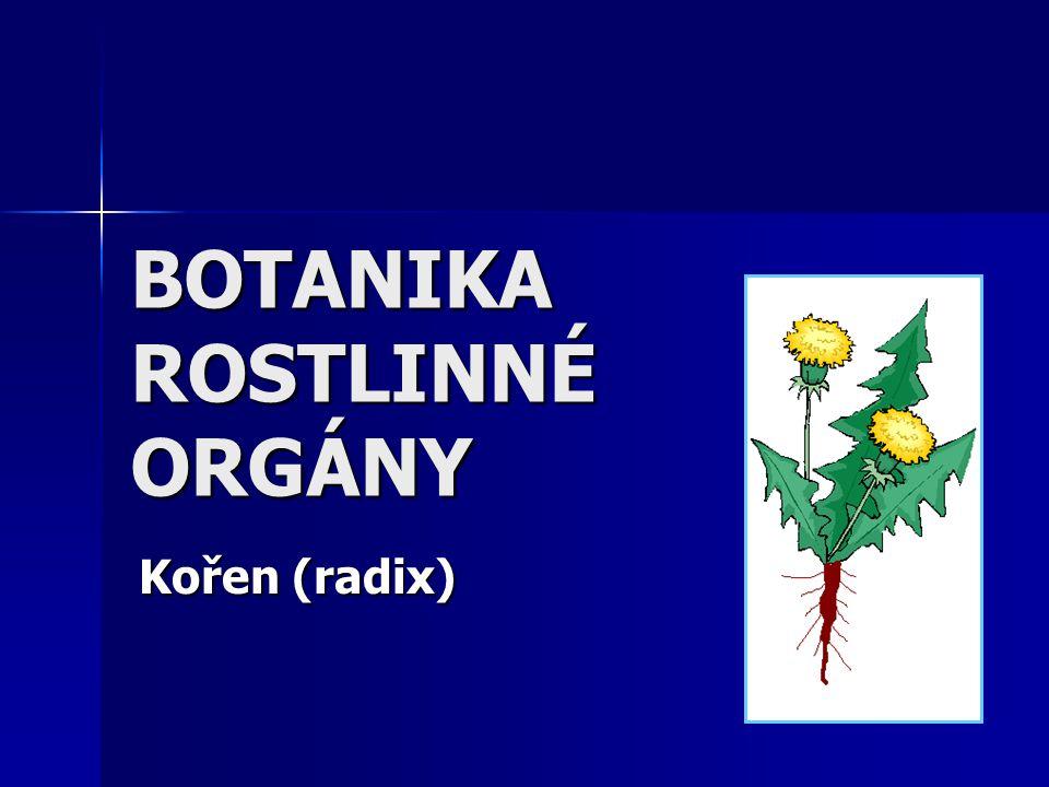 BOTANIKA ROSTLINNÉ ORGÁNY Kořen (radix)