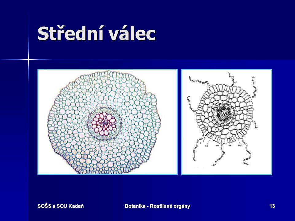 SOŠS a SOU KadaňBotanika - Rostlinné orgány12 Kořeny hlavní a adventivní Hlavní kořen a z něj vystupující kořeny vedlejší – dvouděložné rostliny Hlavn