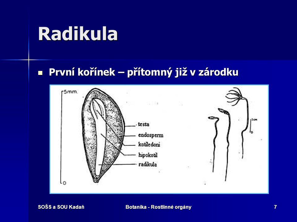 SOŠS a SOU KadaňBotanika - Rostlinné orgány6 Anatomie kořene 1.Čepička 2.Kořenové vlášení 3.Postranní kořínky 4.Kůra 5.Střední válec a.příčný a podéln