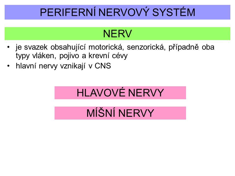 PERIFERNÍ NERVOVÝ SYSTÉM NERV je svazek obsahující motorická, senzorická, případně oba typy vláken, pojivo a krevní cévy hlavní nervy vznikají v CNS H
