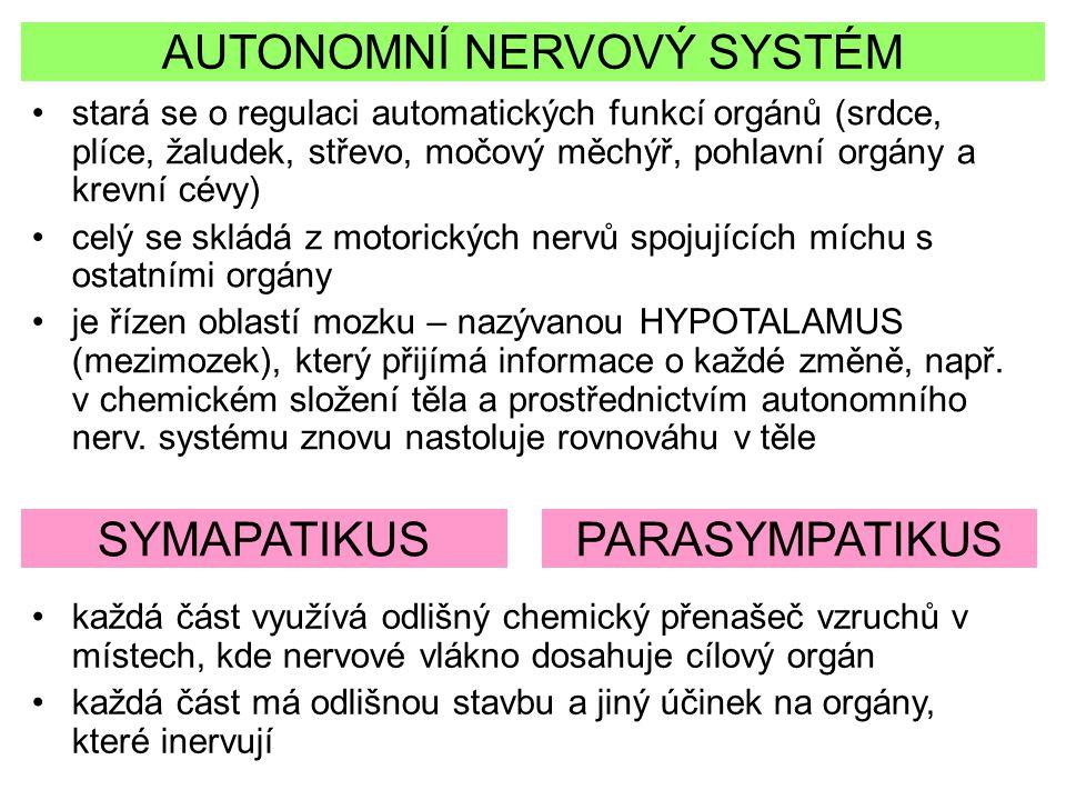 AUTONOMNÍ NERVOVÝ SYSTÉM stará se o regulaci automatických funkcí orgánů (srdce, plíce, žaludek, střevo, močový měchýř, pohlavní orgány a krevní cévy)