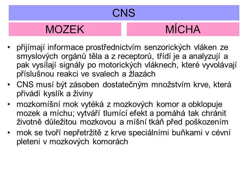 CNS MOZEKMÍCHA přijímají informace prostřednictvím senzorických vláken ze smyslových orgánů těla a z receptorů, třídí je a analyzují a pak vysílají si