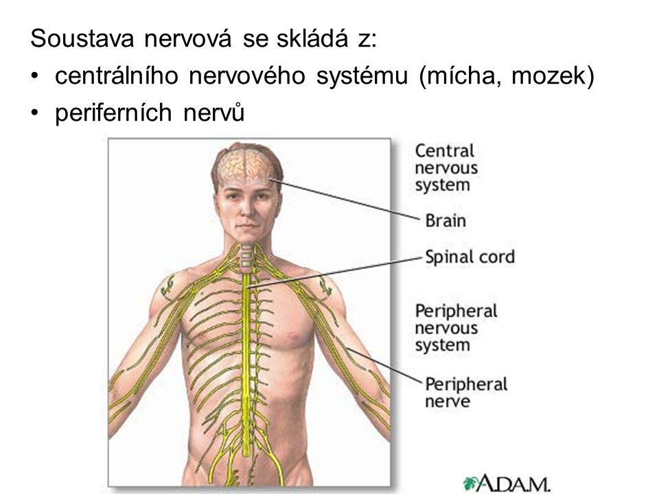 Soustava nervová se skládá z: centrálního nervového systému (mícha, mozek) periferních nervů