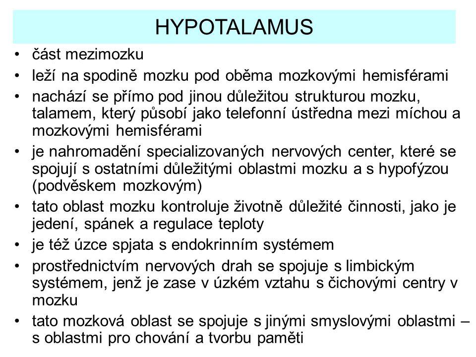 HYPOTALAMUS část mezimozku leží na spodině mozku pod oběma mozkovými hemisférami nachází se přímo pod jinou důležitou strukturou mozku, talamem, který