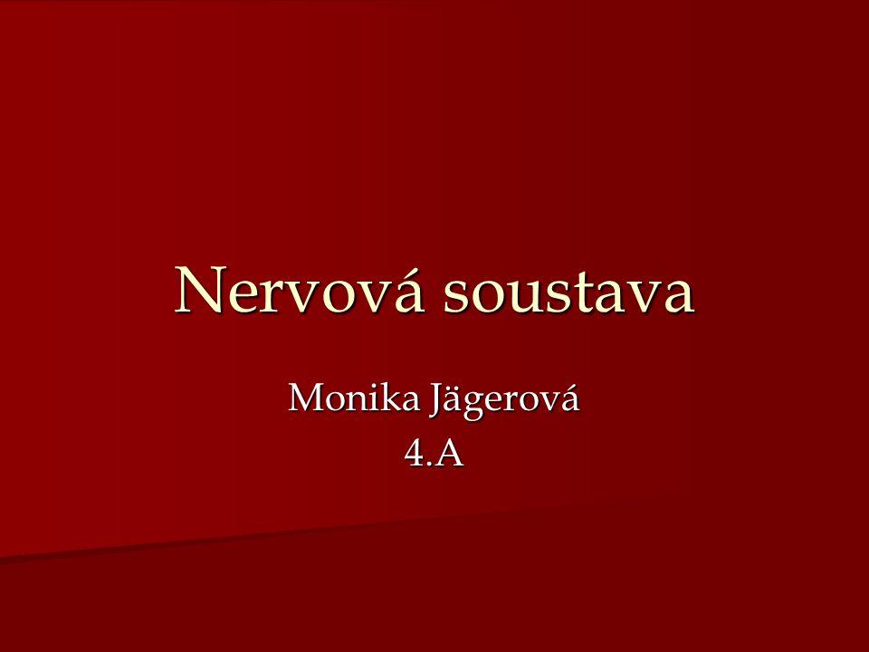 Nervová soustava Monika Jägerová 4.A