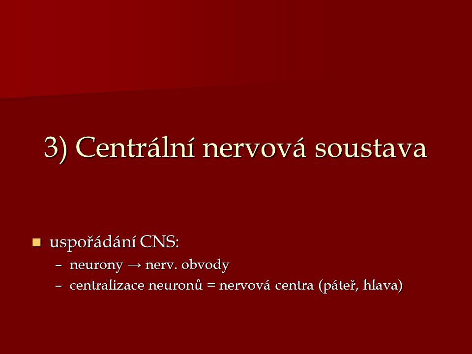 3) Centrální nervová soustava uspořádání CNS: uspořádání CNS: –neurony → nerv. obvody –centralizace neuronů = nervová centra (páteř, hlava)