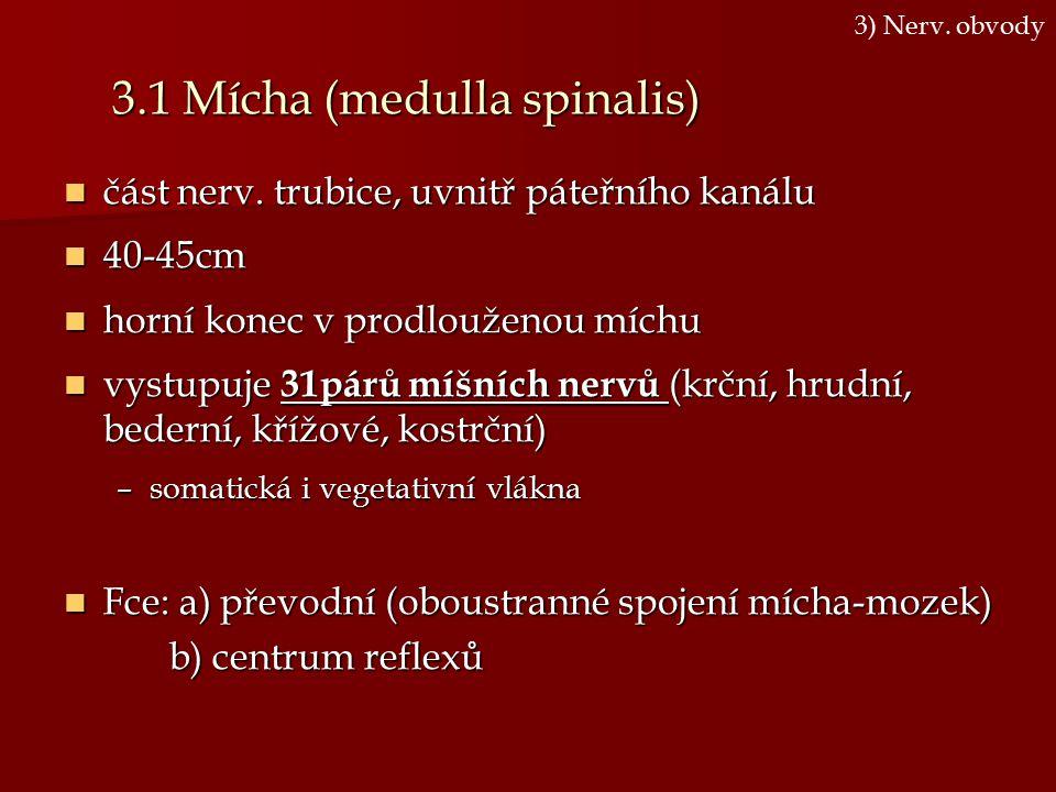 3.1 Mícha (medulla spinalis) část nerv. trubice, uvnitř páteřního kanálu část nerv. trubice, uvnitř páteřního kanálu 40-45cm 40-45cm horní konec v pro