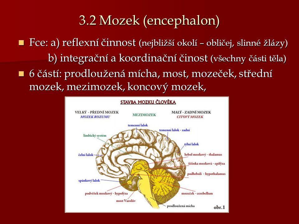 3.2 Mozek (encephalon) Fce: a) reflexní činnost (nejbližší okolí – obličej, slinné žlázy) Fce: a) reflexní činnost (nejbližší okolí – obličej, slinné