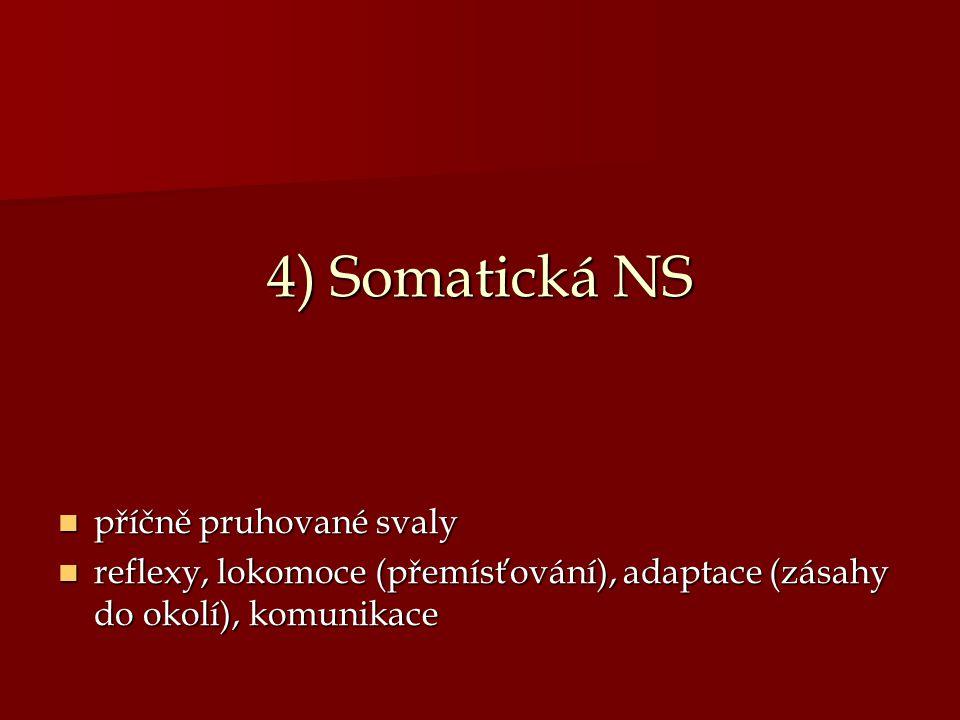 4) Somatická NS příčně pruhované svaly příčně pruhované svaly reflexy, lokomoce (přemísťování), adaptace (zásahy do okolí), komunikace reflexy, lokomo