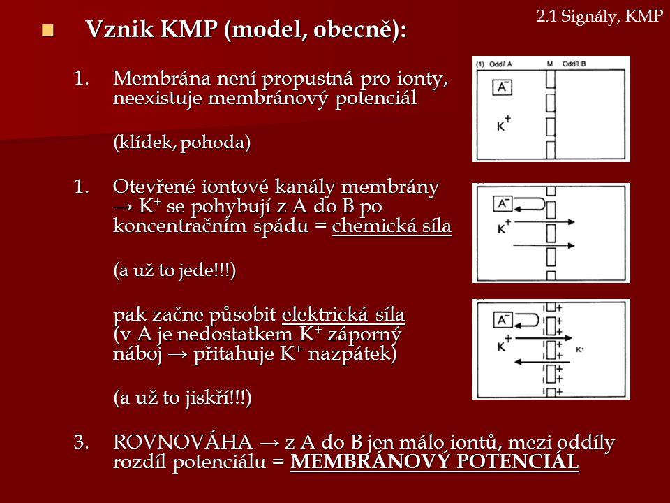 Vznik KMP (model, obecně): Vznik KMP (model, obecně): 1.Membrána není propustná pro ionty, neexistuje membránový potenciál (klídek, pohoda) 1.Otevřené