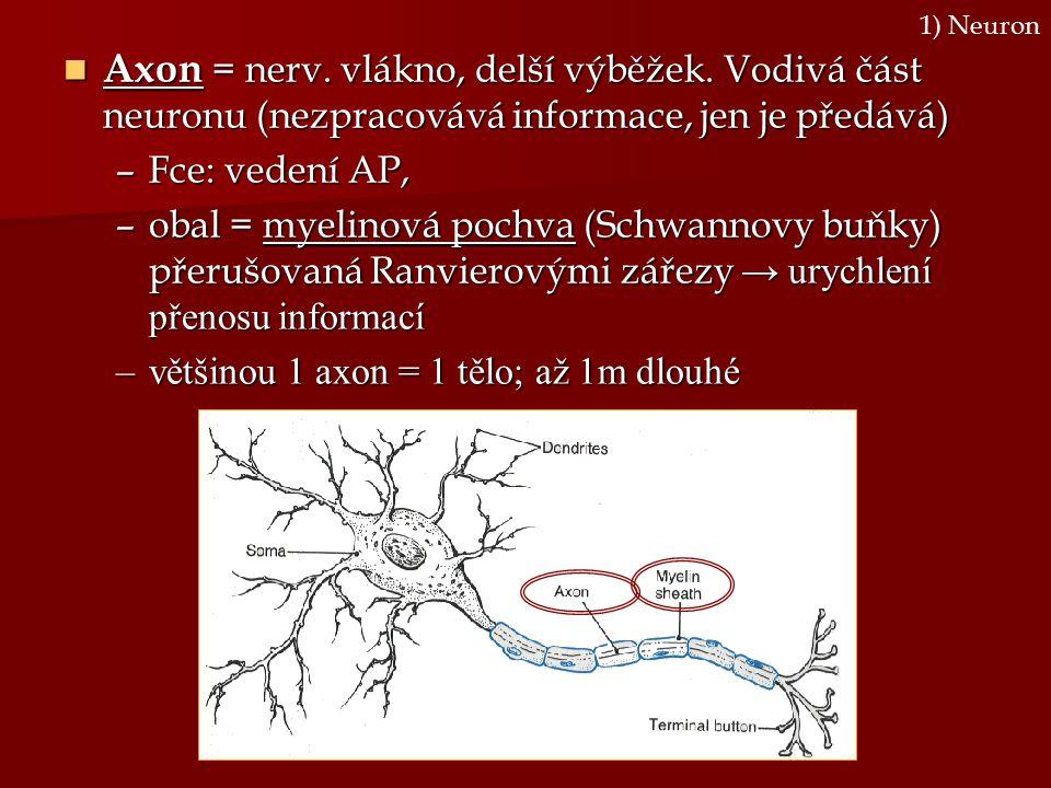 Axon = nerv. vlákno, delší výběžek. Vodivá část neuronu (nezpracovává informace, jen je předává) Axon = nerv. vlákno, delší výběžek. Vodivá část neuro