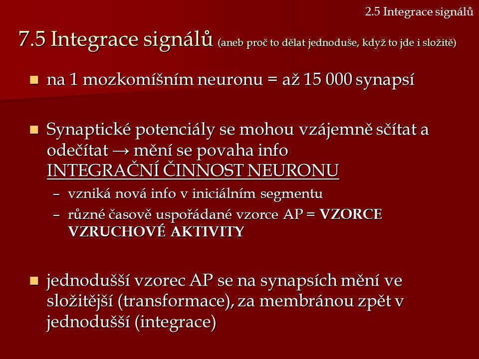 7.5 Integrace signálů (aneb proč to dělat jednoduše, když to jde i složitě) na 1 mozkomíšním neuronu = až 15 000 synapsí na 1 mozkomíšním neuronu = až