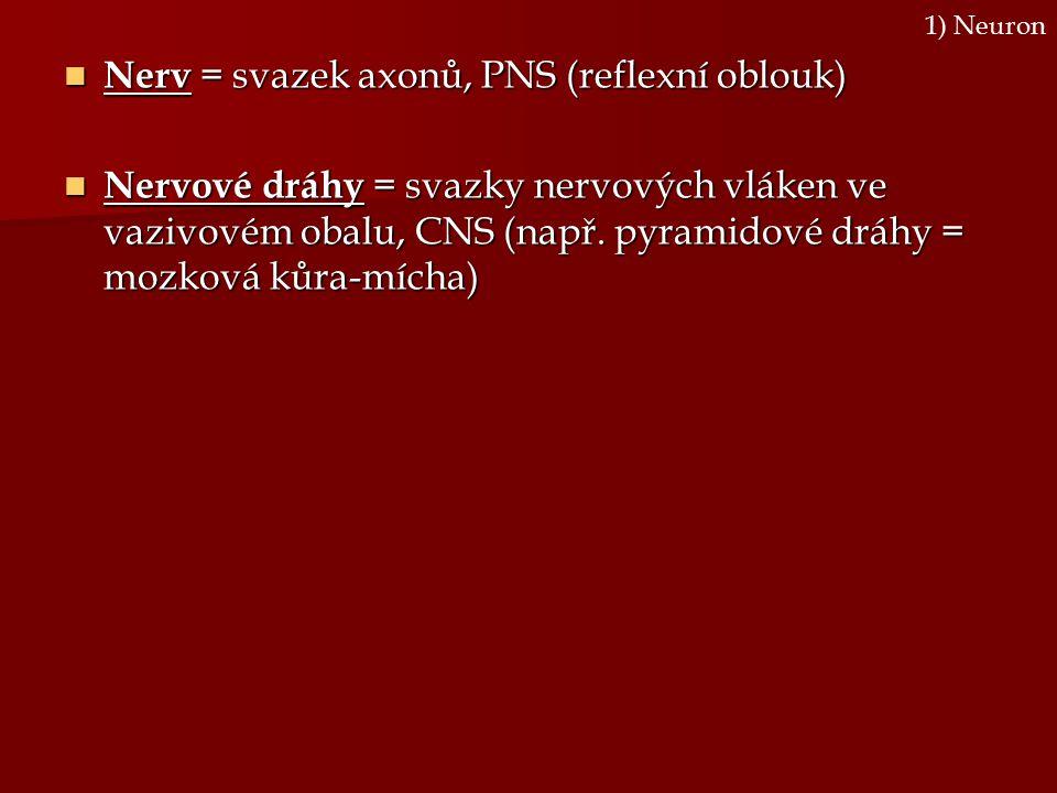 Nerv = svazek axonů, PNS (reflexní oblouk) Nerv = svazek axonů, PNS (reflexní oblouk) Nervové dráhy = svazky nervových vláken ve vazivovém obalu, CNS