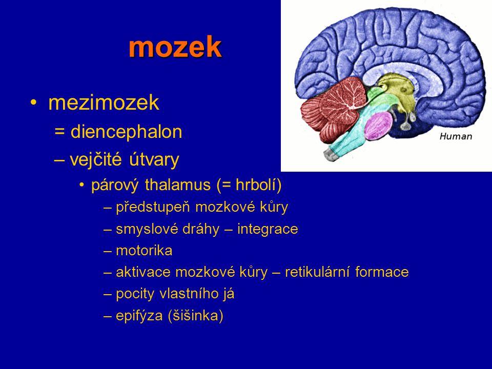 mozek mezimozek = diencephalon –vejčité útvary párový thalamus (= hrbolí) –předstupeň mozkové kůry –smyslové dráhy – integrace –motorika –aktivace moz