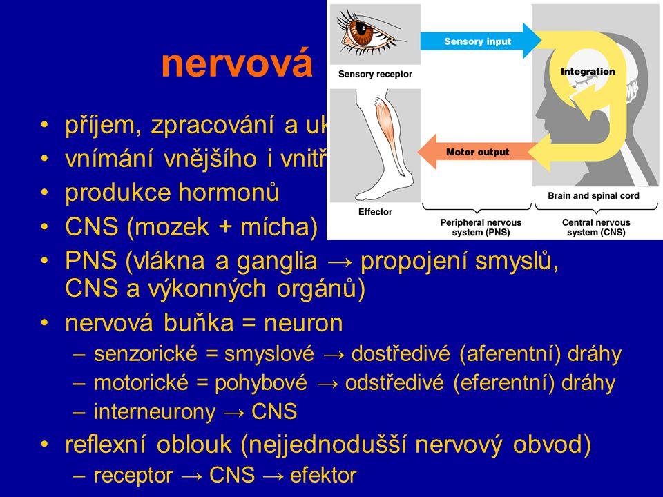 nervová soustava příjem, zpracování a ukládání informací vnímání vnějšího i vnitřního okolí produkce hormonů CNS (mozek + mícha) PNS (vlákna a ganglia