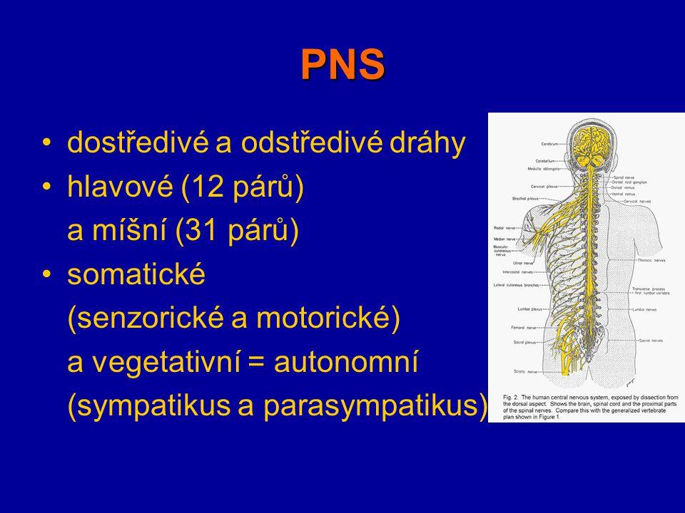 PNS dostředivé a odstředivé dráhy hlavové (12 párů) a míšní (31 párů) somatické (senzorické a motorické) a vegetativní = autonomní (sympatikus a paras