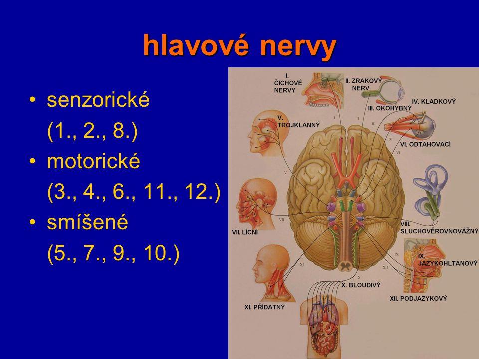 hlavové nervy senzorické (1., 2., 8.) motorické (3., 4., 6., 11., 12.) smíšené (5., 7., 9., 10.)