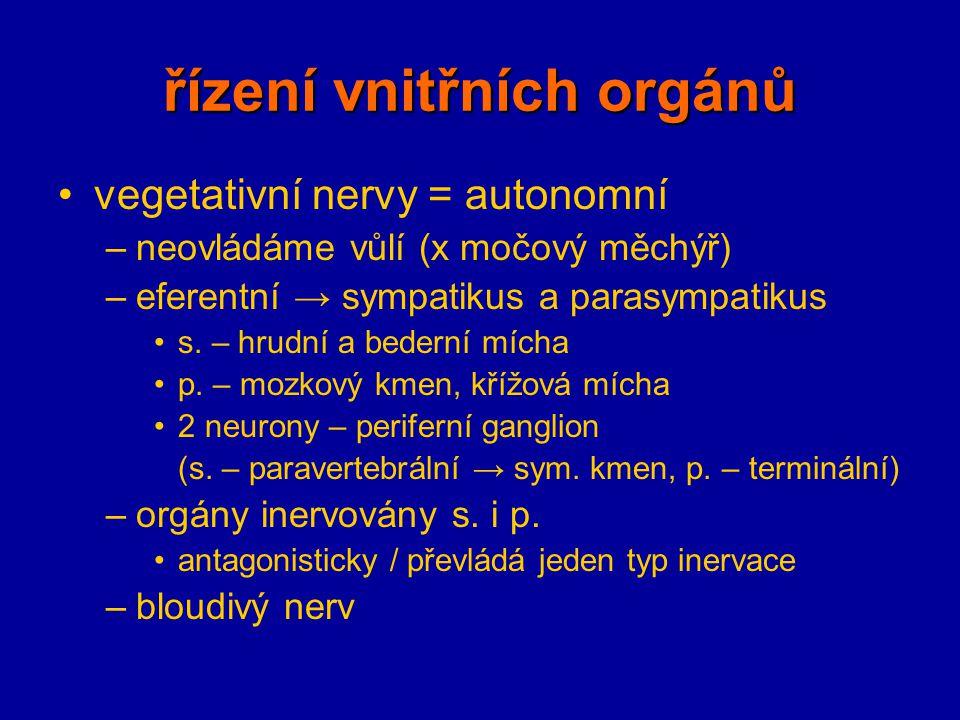 řízení vnitřních orgánů vegetativní nervy = autonomní –neovládáme vůlí (x močový měchýř) –eferentní → sympatikus a parasympatikus s. – hrudní a bedern