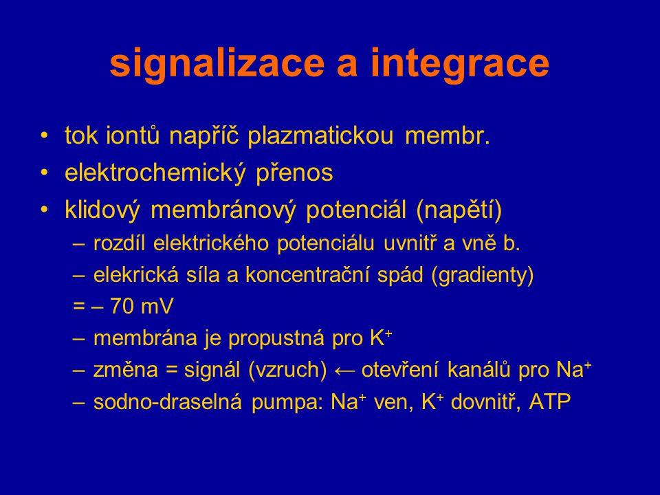 signalizace a integrace tok iontů napříč plazmatickou membr. elektrochemický přenos klidový membránový potenciál (napětí) –rozdíl elektrického potenci