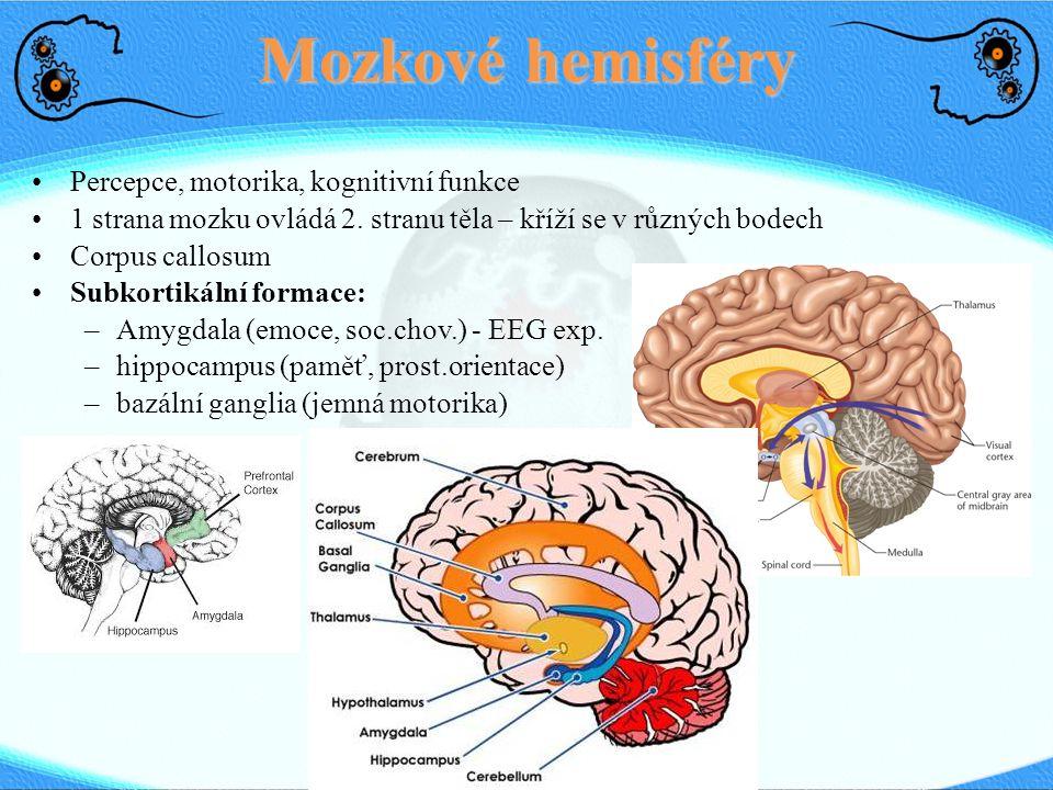Pozornost ● Testovatelná část vědomí ● Selektivní zaměření senzorického aparátu na 1 prvek ● Posner – 4 komponenty: opuštění současného → přesun → nová lokace → úprava bdělosti Neurons in the posterior parietal cortex of a monkey