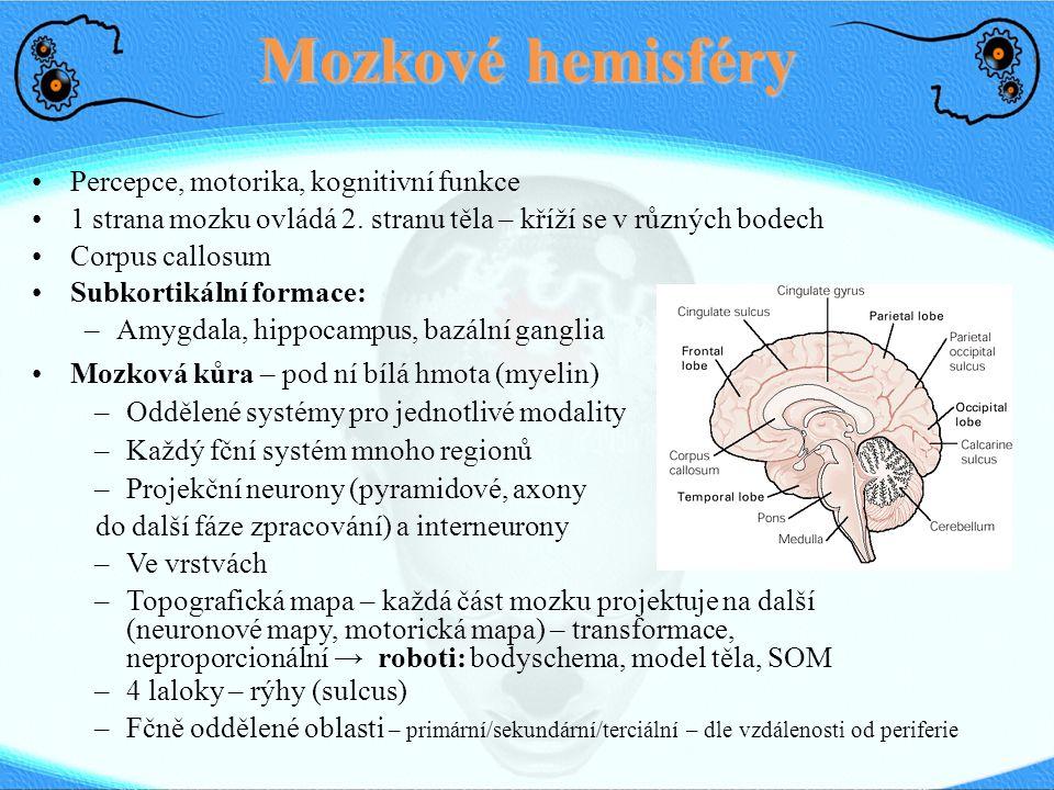 Mozkové hemisféry Percepce, motorika, kognitivní funkce 1 strana mozku ovládá 2. stranu těla – kříží se v různých bodech Corpus callosum Subkortikální